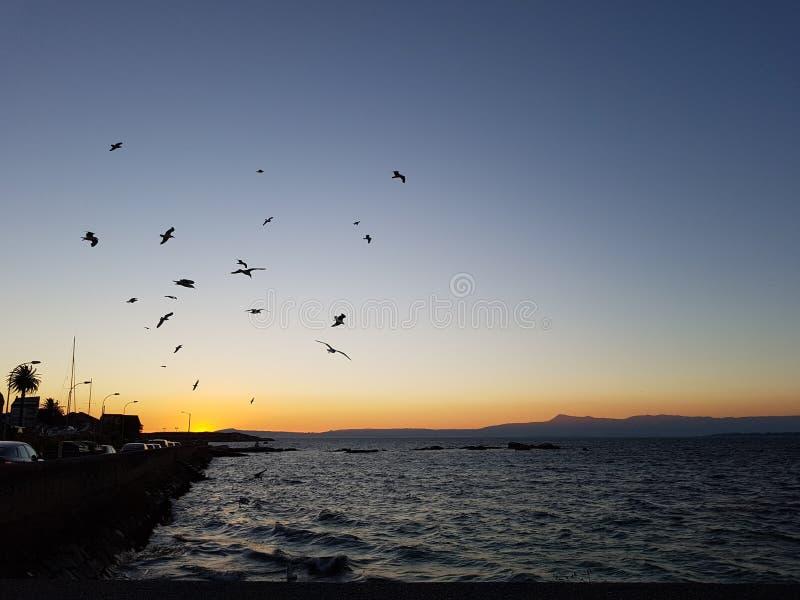Seagul solnedgångstrand arkivbild