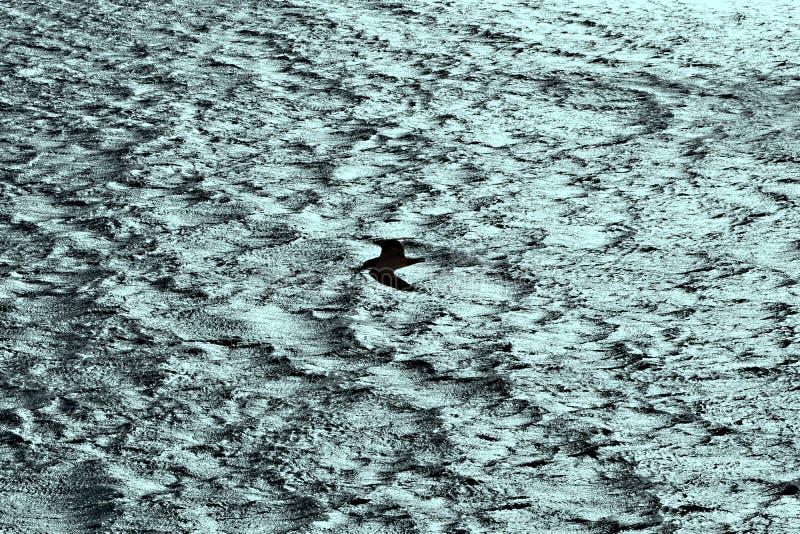 Seagull żeglowanie na silnym wiatrze fotografia royalty free