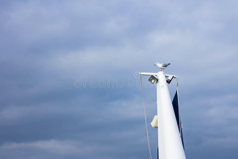 Seagull överst av ett skepp i den Volendam hamnen, Nederländerna arkivfoton
