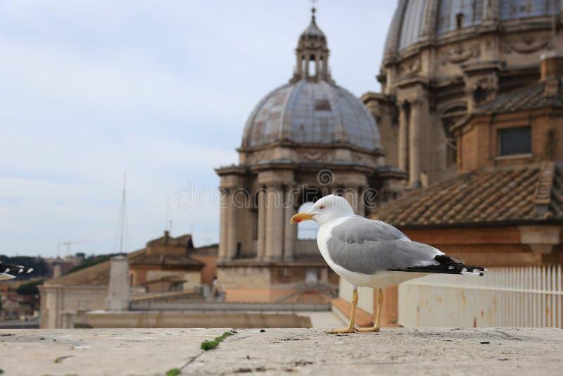 Seagull överst av Sanen Pietro Dome, Vatican City arkivbilder