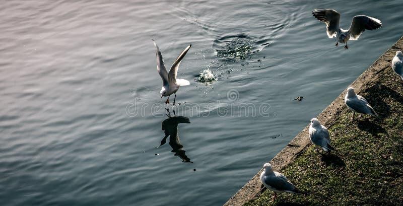 Seagull εδάφη στοκ φωτογραφίες με δικαίωμα ελεύθερης χρήσης