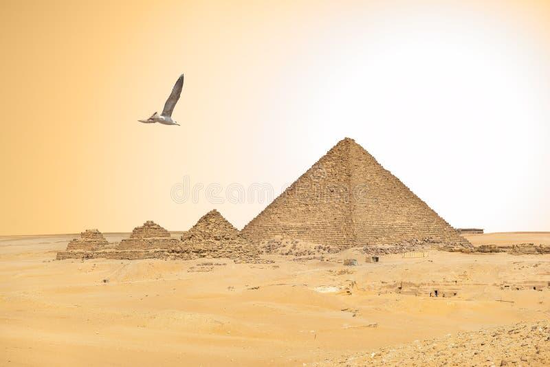 Seagull και αιγυπτιακές πυραμίδες στοκ φωτογραφία με δικαίωμα ελεύθερης χρήσης