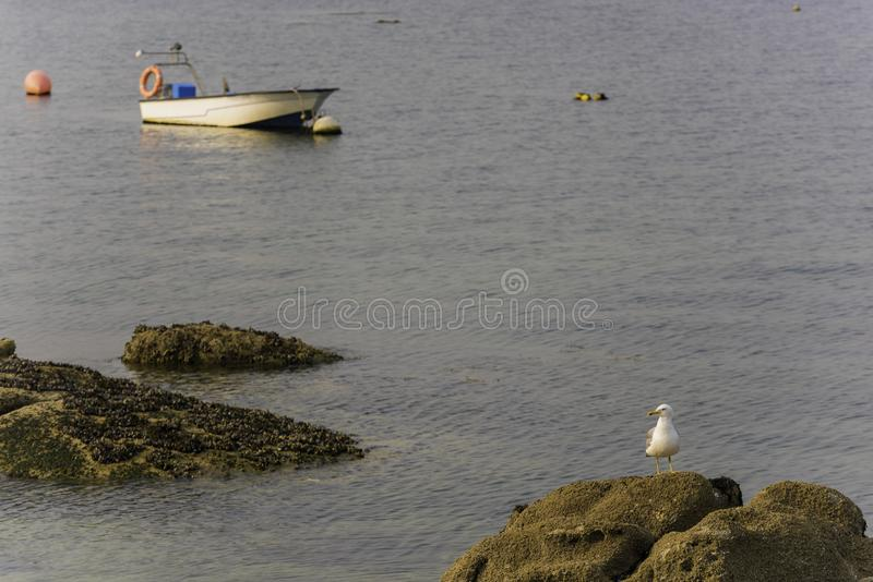 Seagull και βάρκα στοκ φωτογραφίες με δικαίωμα ελεύθερης χρήσης