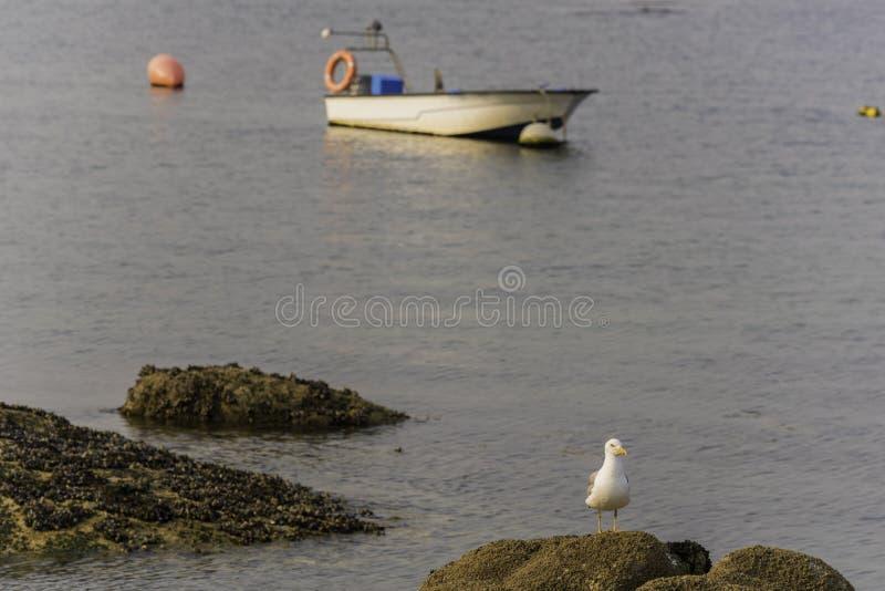 Seagull και βάρκα στοκ φωτογραφίες