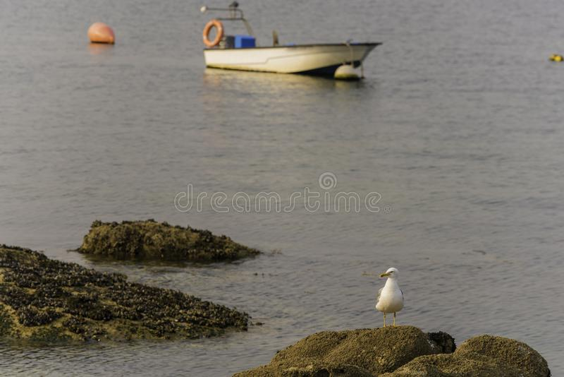 Seagull και βάρκα στοκ εικόνα με δικαίωμα ελεύθερης χρήσης