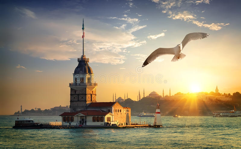 Seagull και κοριτσιών πύργος στοκ εικόνες με δικαίωμα ελεύθερης χρήσης