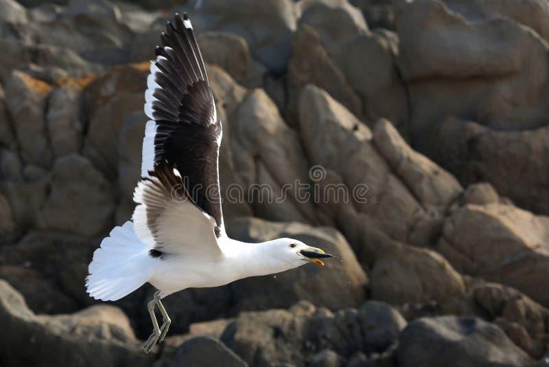 Seagull και ψάρια στοκ εικόνα