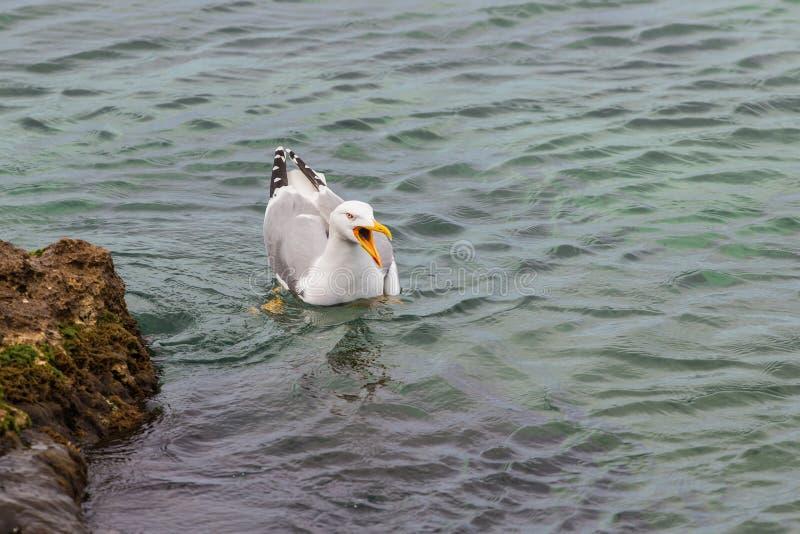 Seagull κοντά στην ακτή στοκ εικόνα
