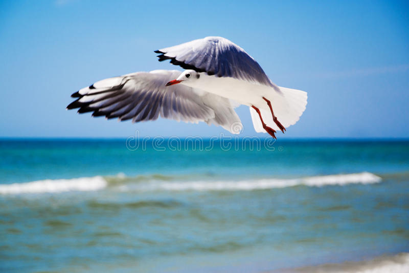Seagull μέτωπο του ουρανού στοκ φωτογραφία
