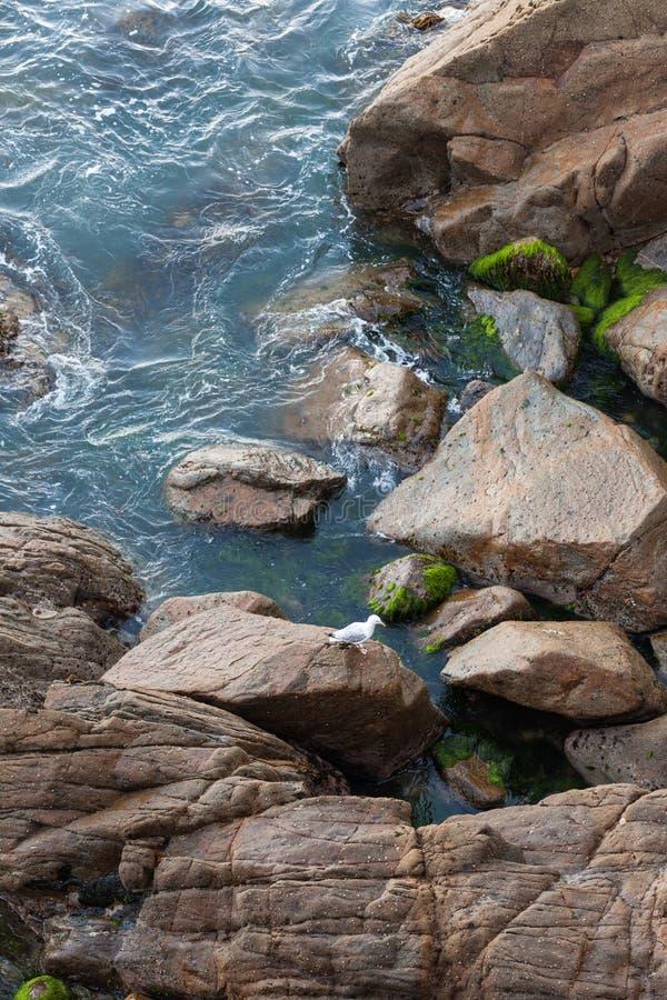 Seagull μορίων κάθεται στον υγρό βράχο στο μικρό κόλπο στοκ φωτογραφίες