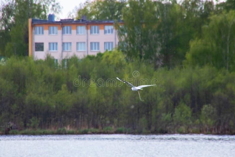 Seagull πέταγμα και περιττώματα πέρα από τον ποταμό στοκ φωτογραφία με δικαίωμα ελεύθερης χρήσης