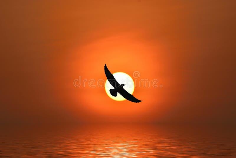 Seagull πέταγμα διανυσματική απεικόνιση