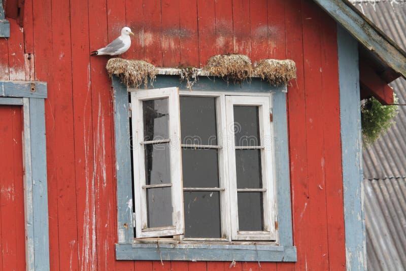 Seagull παραθύρων της Νορβηγίας στοκ εικόνες με δικαίωμα ελεύθερης χρήσης