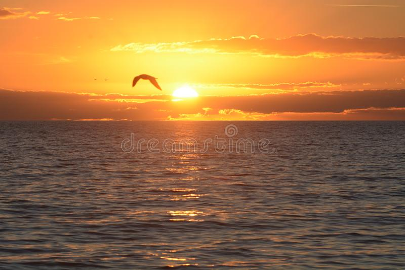 Seagull πετά μέσω της ακτίνας της ανατολής σε μια παραλία νησιών στοκ εικόνες