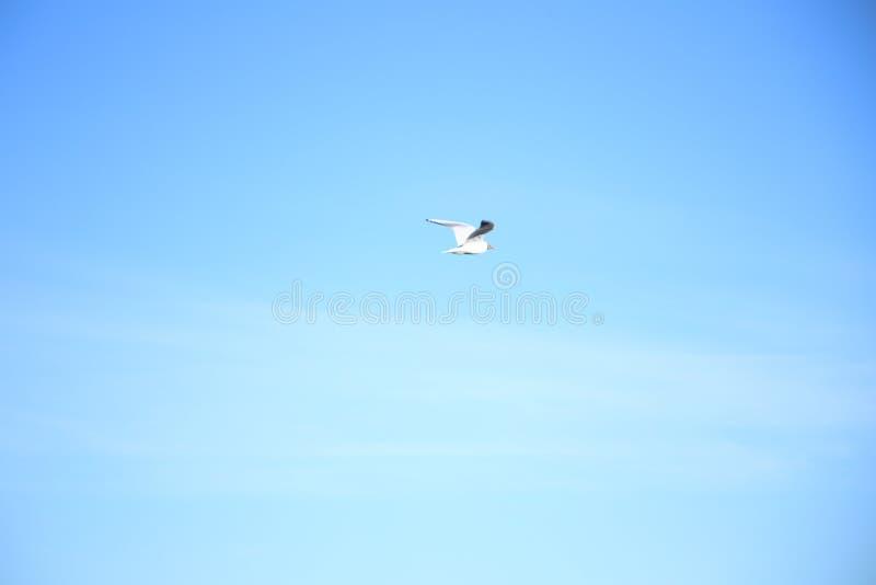 Seagull πετά στον ουρανό στοκ φωτογραφίες με δικαίωμα ελεύθερης χρήσης