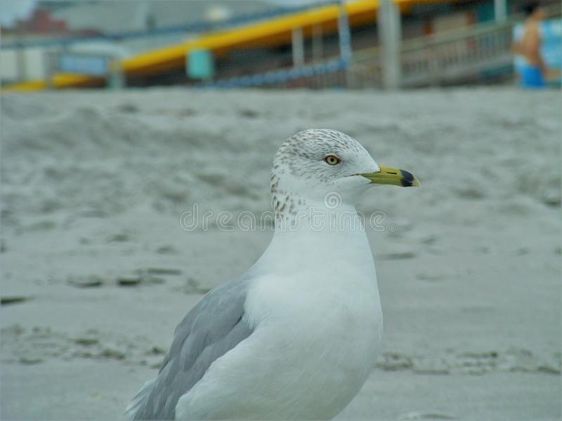 Seagull πουλιών θάλασσας πουλί στοκ φωτογραφία με δικαίωμα ελεύθερης χρήσης