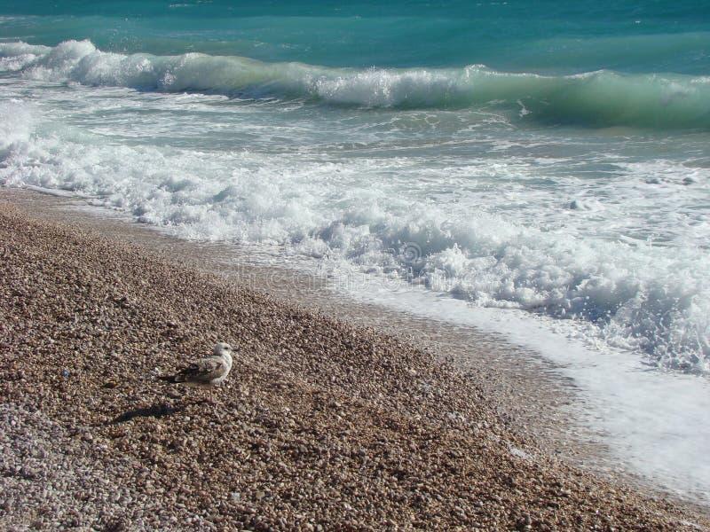 Seagull που απολαμβάνει το θερινό καιρό στοκ εικόνα