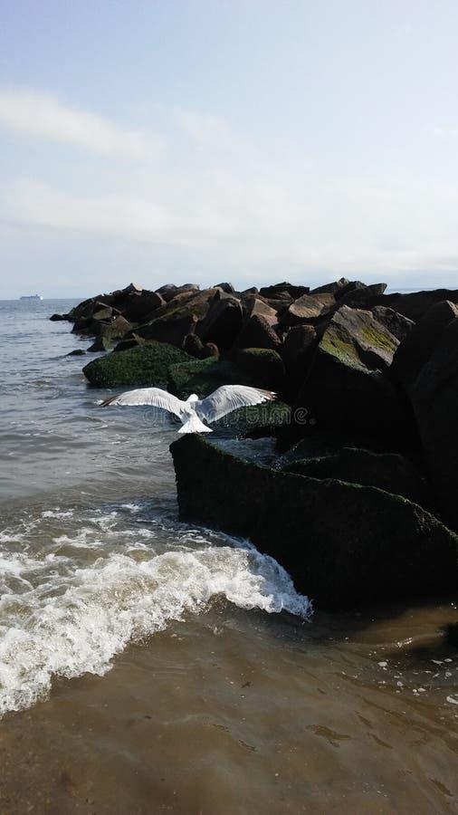 Seagull που πετά από το λιμενοβραχίονα στον Ατλαντικό Ωκεανό τη νεφελώδη ημέρα στοκ εικόνα