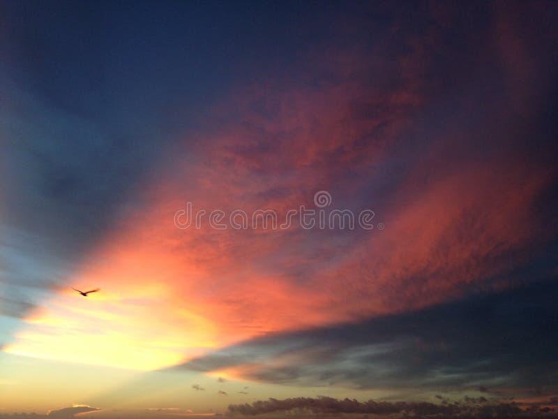Seagull που πετά στον ουρανό με τις του λυκόφωτος ακτίνες επάνω από την παραλία του Ατλαντικού Ωκεανού κατά τη διάρκεια της Dawn στοκ εικόνες