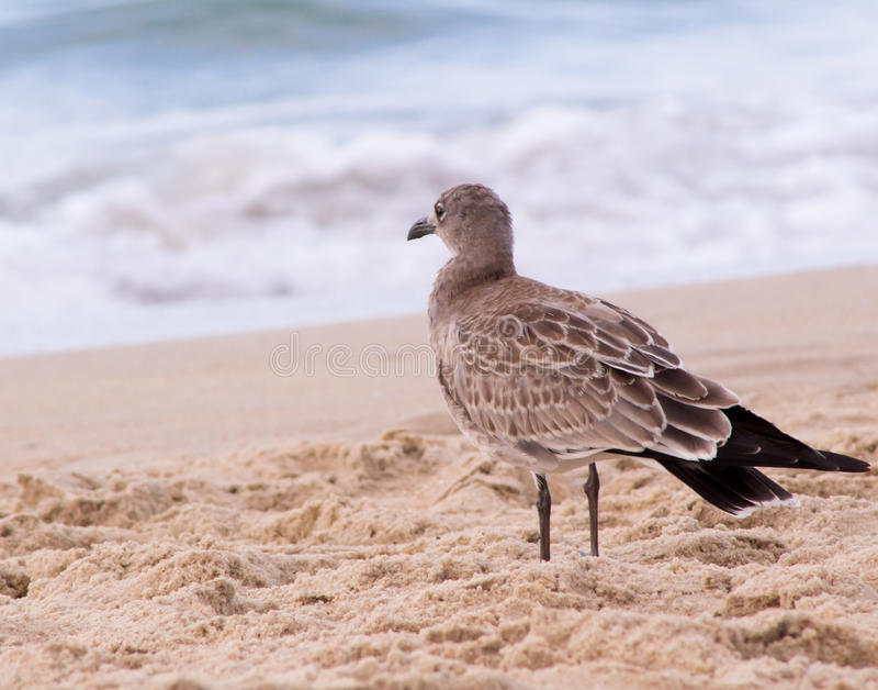 Seagull που προσέχει τα κύματα στοκ εικόνα με δικαίωμα ελεύθερης χρήσης