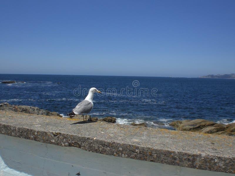 Seagull που σκαρφαλώνει σε έναν τοίχο που αγνοεί τη θάλασσα στοκ φωτογραφία με δικαίωμα ελεύθερης χρήσης