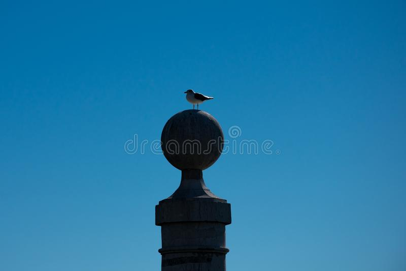 Seagull που στέκεται πέρα από μια στήλη Ποταμός Tagus στοκ εικόνες με δικαίωμα ελεύθερης χρήσης