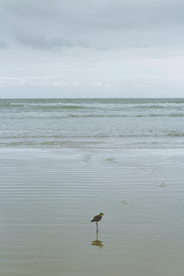 Seagull που συνθέτει την εικόνα στοκ εικόνες