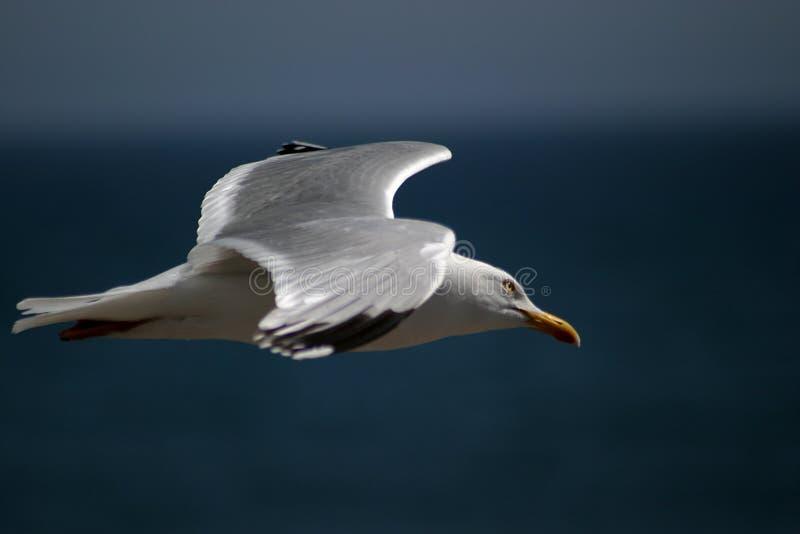 Seagull πτήσης