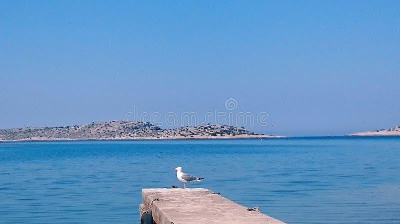 Seagull σε μια αποβάθρα στοκ εικόνα