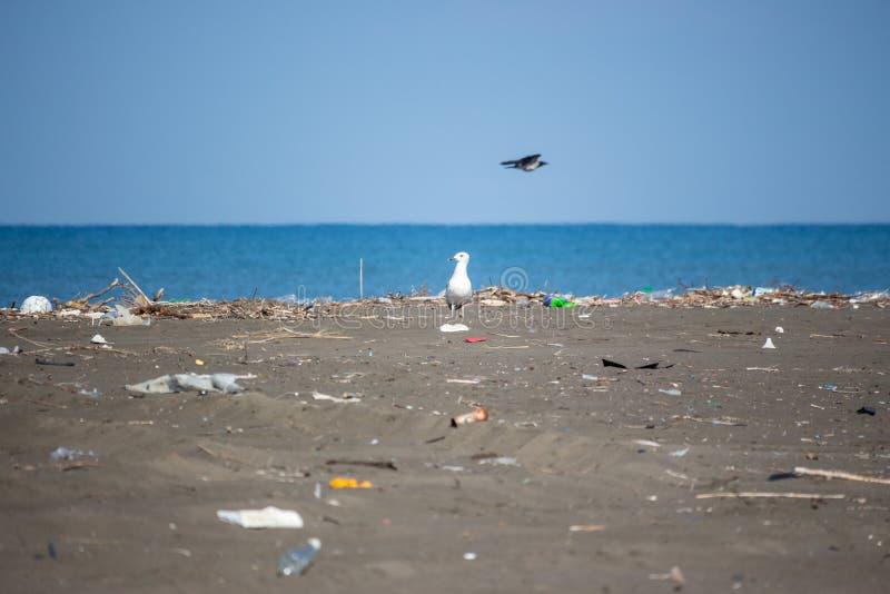 Seagull σε μια παραλία, οικολογική καταστροφή, εξάλειψη των πουλιών, NA στοκ εικόνες