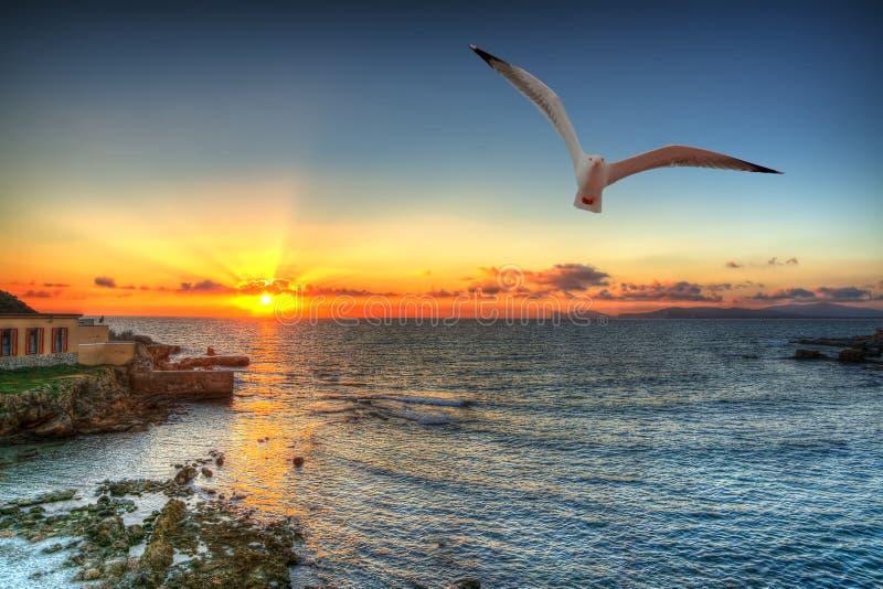 Seagull σκιαγραφία σε έναν πορτοκαλή ουρανό στοκ φωτογραφίες με δικαίωμα ελεύθερης χρήσης