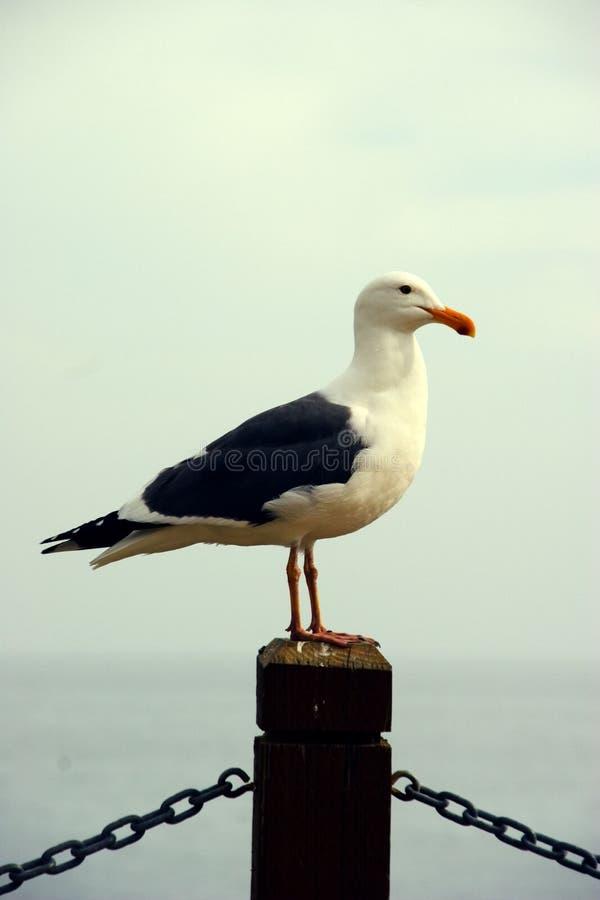 seagull σκοπός στοκ φωτογραφία