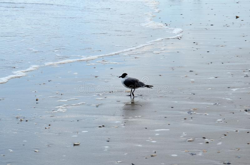 Seagull στην ακτή της Ατλάντικ Σίτυ στοκ φωτογραφία