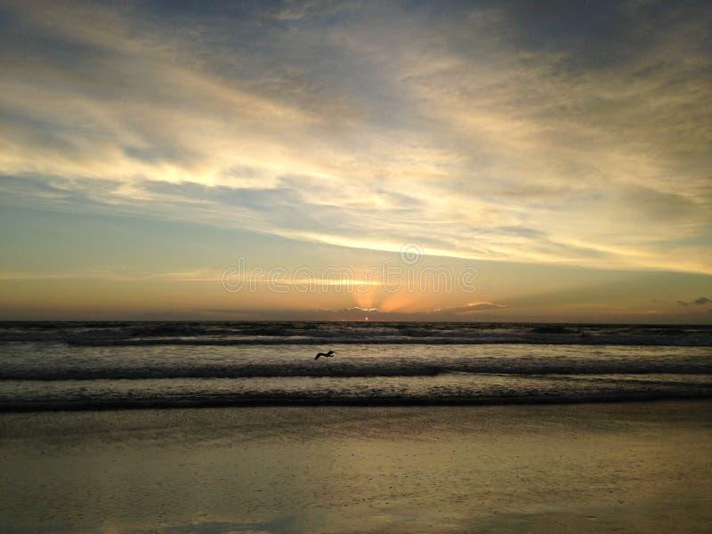 Seagull στην παραλία του Ατλαντικού Ωκεανού κατά τη διάρκεια της Dawn στοκ εικόνα με δικαίωμα ελεύθερης χρήσης