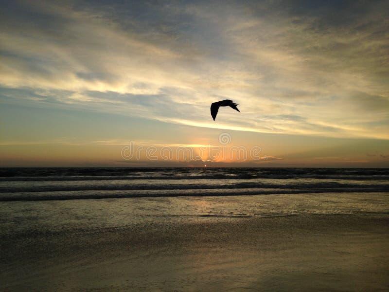 Seagull στην παραλία του Ατλαντικού Ωκεανού κατά τη διάρκεια της Dawn στοκ εικόνα