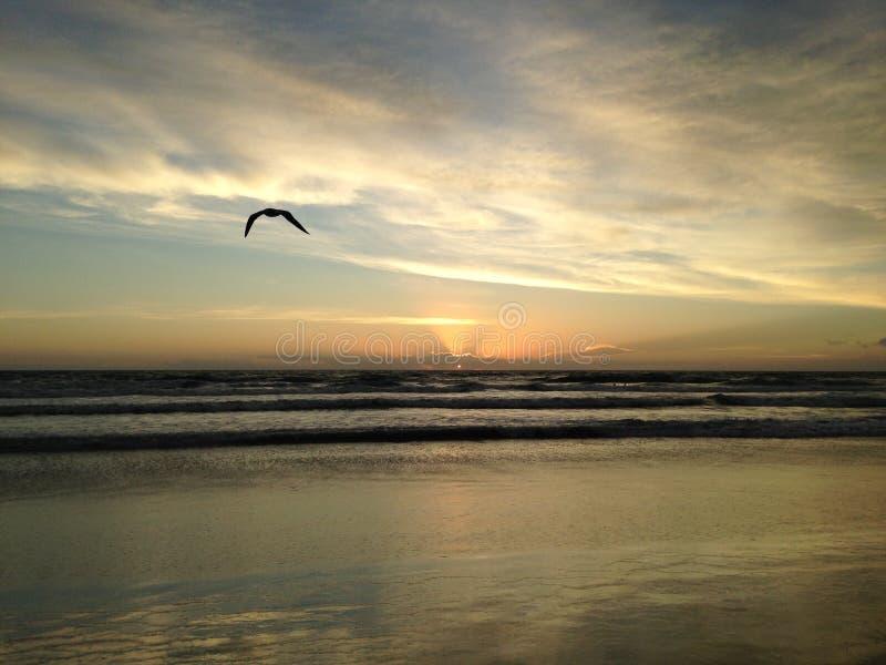 Seagull στην παραλία του Ατλαντικού Ωκεανού κατά τη διάρκεια της Dawn στοκ φωτογραφίες