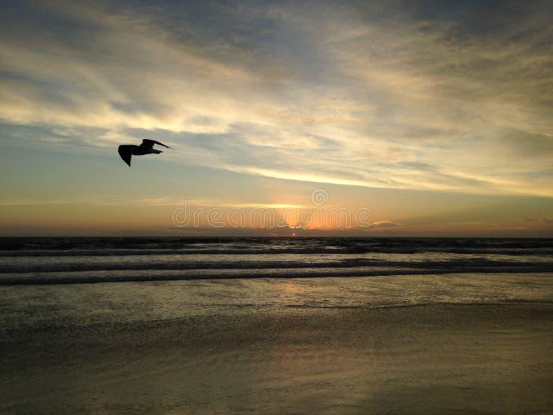 Seagull στην παραλία του Ατλαντικού Ωκεανού κατά τη διάρκεια της Dawn στοκ εικόνες