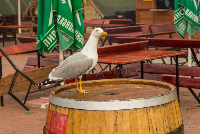 Seagull στην πόλη στοκ εικόνες με δικαίωμα ελεύθερης χρήσης