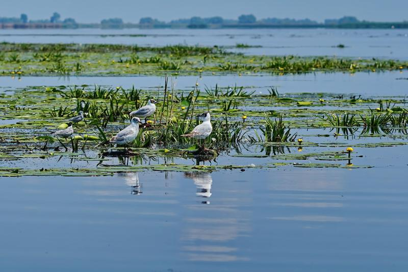Seagull στη λίμνη στοκ εικόνες με δικαίωμα ελεύθερης χρήσης