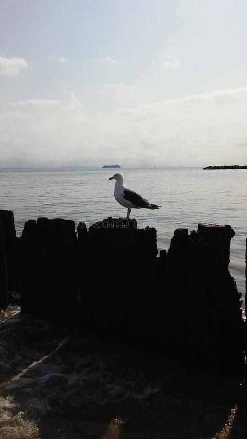 Seagull στο λιμενοβραχίονα στον Ατλαντικό Ωκεανό τη νεφελώδη ημέρα στοκ εικόνα