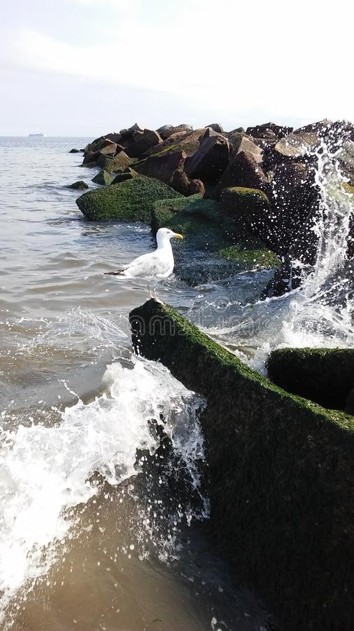 Seagull στο λιμενοβραχίονα στον Ατλαντικό Ωκεανό τη νεφελώδη ημέρα στοκ εικόνα με δικαίωμα ελεύθερης χρήσης
