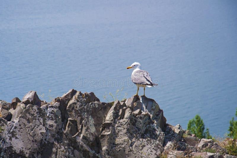 Seagull συνεδρίαση σε έναν βράχο στην άκρη του βουνού Άποψη της μεγαλύτερης πηγής το σε ολόκληρο Καύκασο - λίμνη Sevan Gegharkuni στοκ εικόνα με δικαίωμα ελεύθερης χρήσης