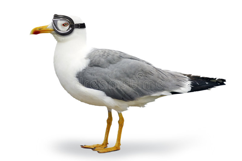 seagull τολμηρό στοκ φωτογραφία με δικαίωμα ελεύθερης χρήσης