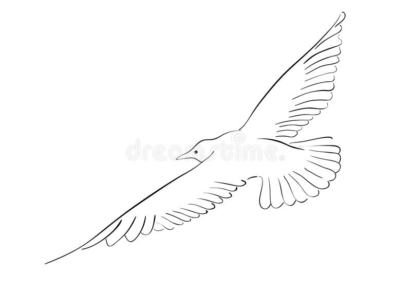 Download Seagull Royalty Free Stock Photos - Image: 12254678