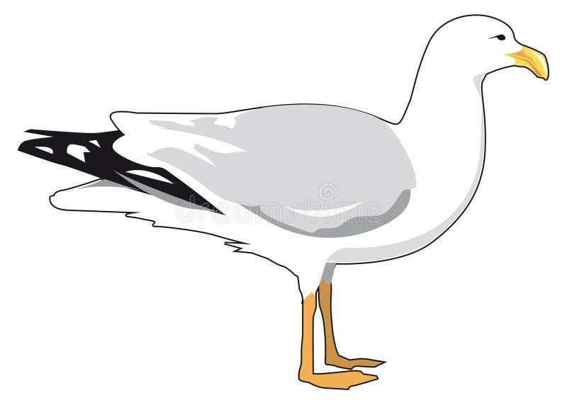 seagull ilustracja wektor