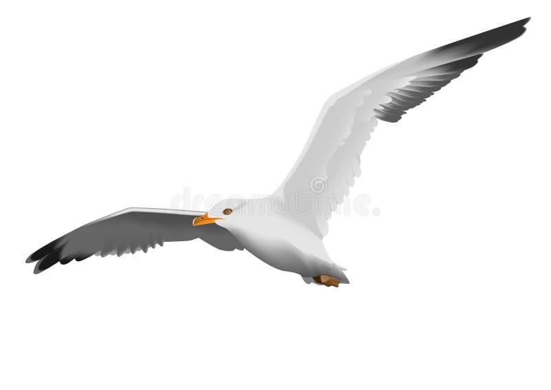 seagull royalty ilustracja