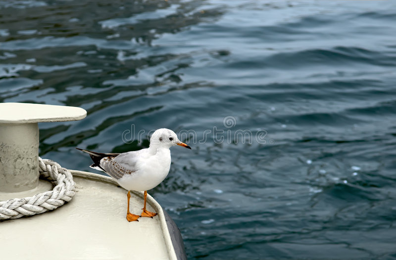 Seagull. In back part of ship royalty free stock image