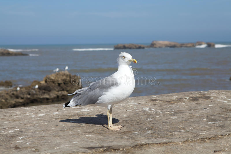 Download Seagull Stock Images - Image: 27047144