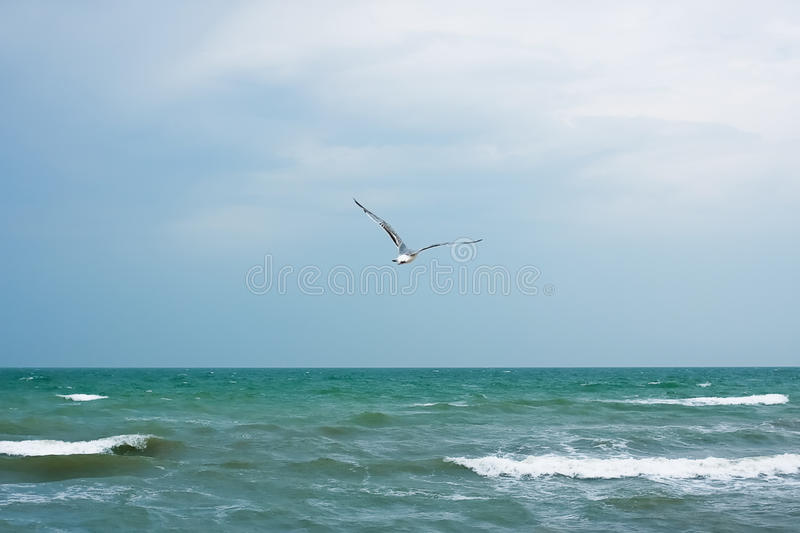 Download Seagull stock image. Image of soar, nobody, tranquil - 27093261