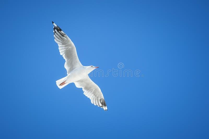 Download Seagull stock image. Image of sea, closeup, animal, blue - 28678431